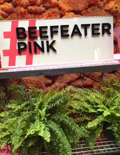 BeefeaterPink_sanIdelfonso-3